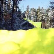 Noticia – Cayó nieve amarilla en los Cárpatos – Actividades