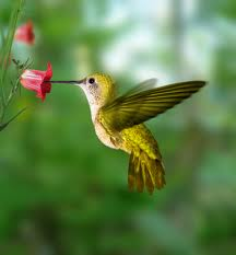 La leyenda del colibrí