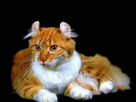 El gato, pura sensibilidad