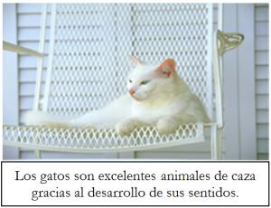 El.gato.sensible