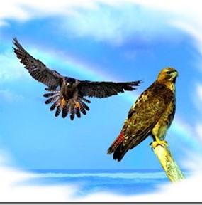 El halcón que no volaba