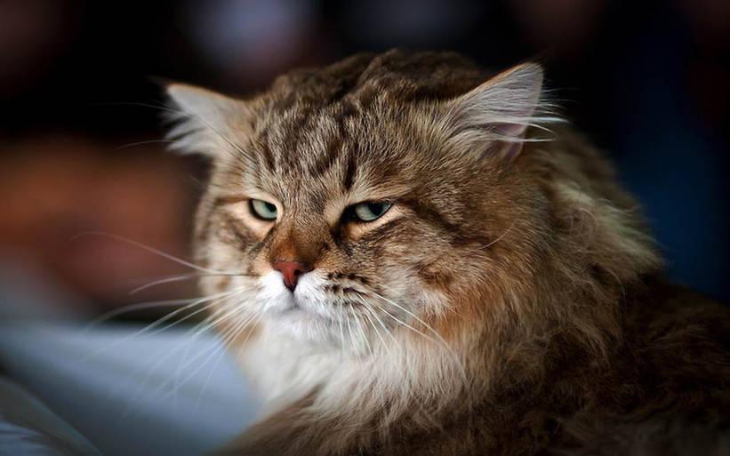 Poesías: El gato – Celacanto